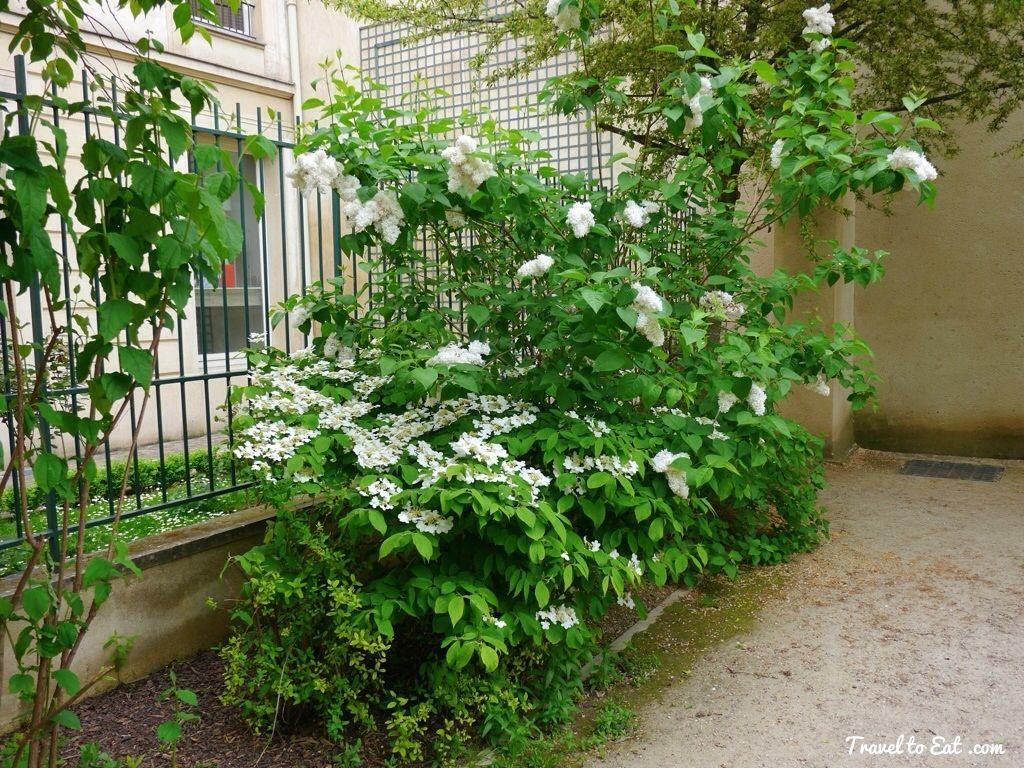 Jardin Anne Frank The Marais Paris Jardin