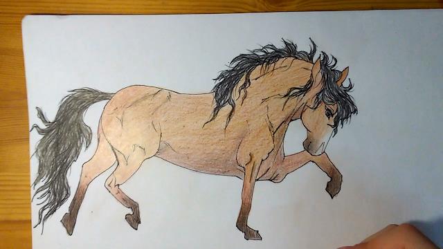 Drawing A Horse Fantastic Art Drawings Art