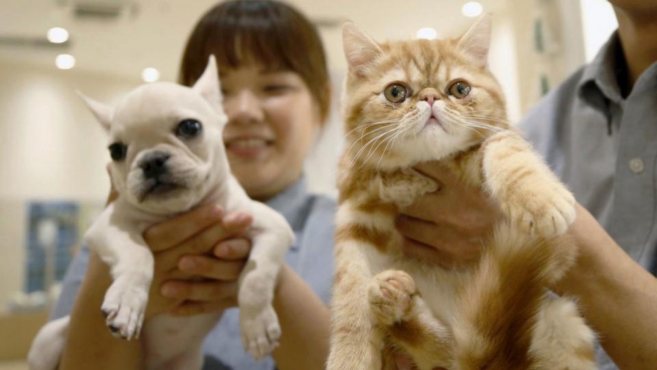 Pet insurance market in Japan expanding due to rising vet