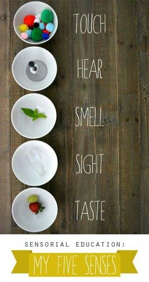 One way to teach the five senses