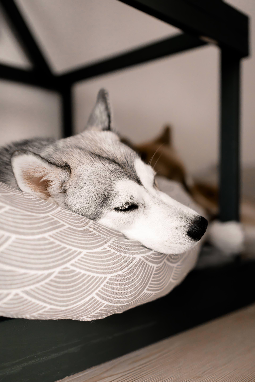 So Einfach Kann Man Sich Eine Moderne Hundehütte Für Die Wohnung