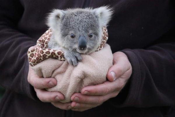 Photo of Stilübung #animal lustige Untertitel #animaler lustiger Humor #animaler lustiger Meme #baby …