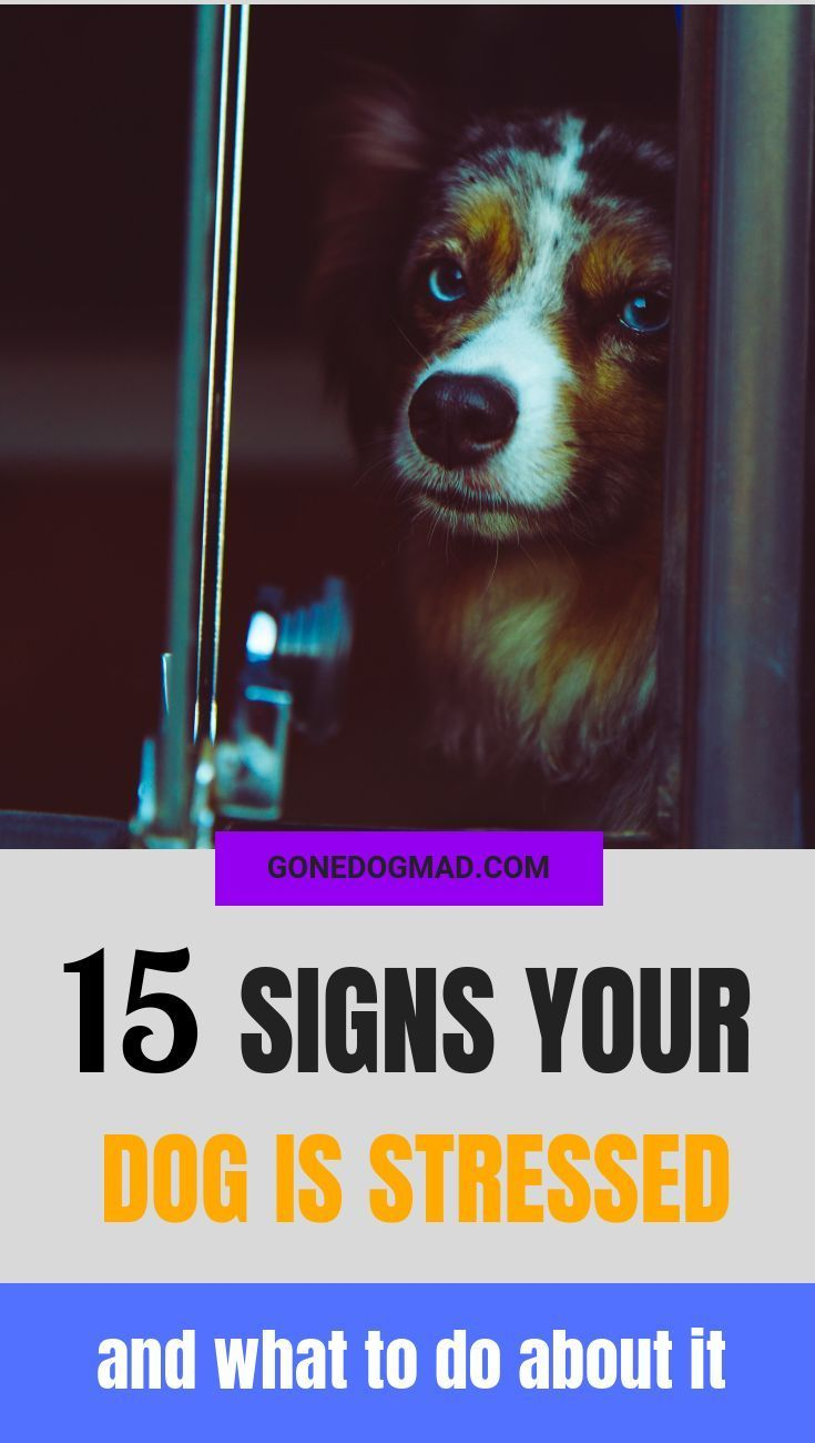 15 Signs Your Dog Is Stressed And What To Do About It Love All