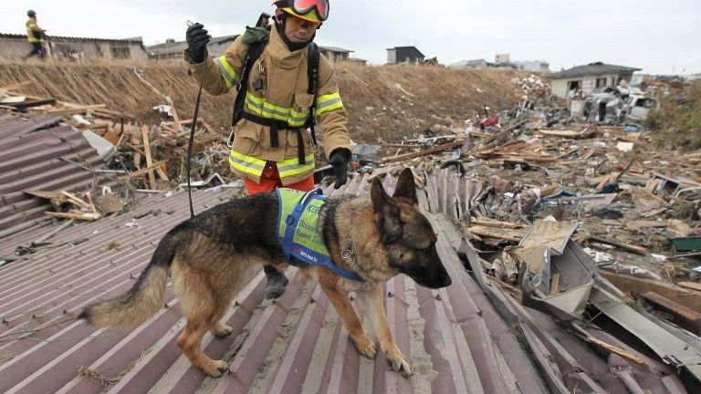 Die Supernasen Hunde Tiere Hundebesitzer