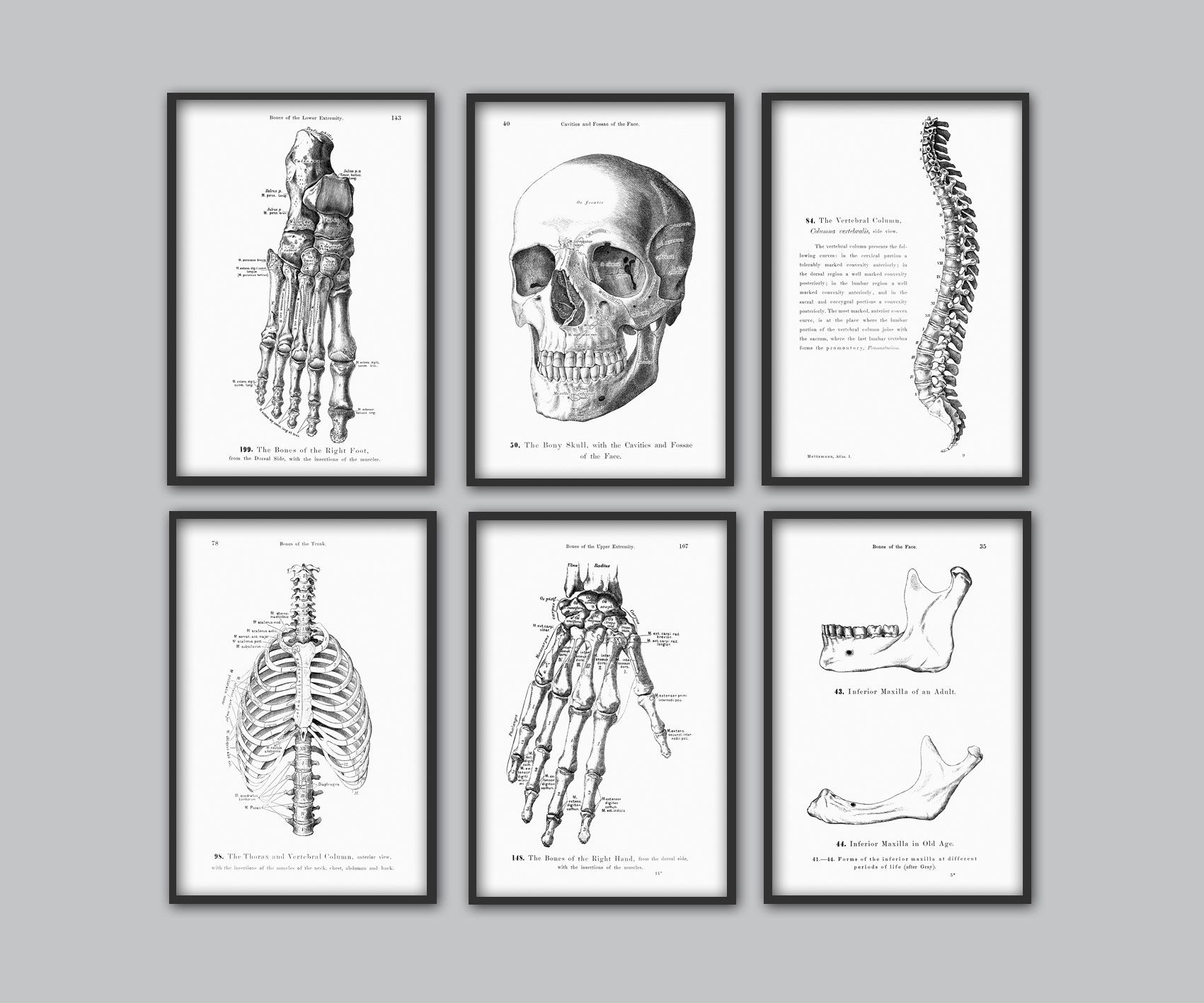 Human Anatomy Antique Art Print Set of 6, Vintage Anatomy Home Decor, Antique Book Plate, Medical Student Gift Idea Picture Set of 6 #medicalstudents