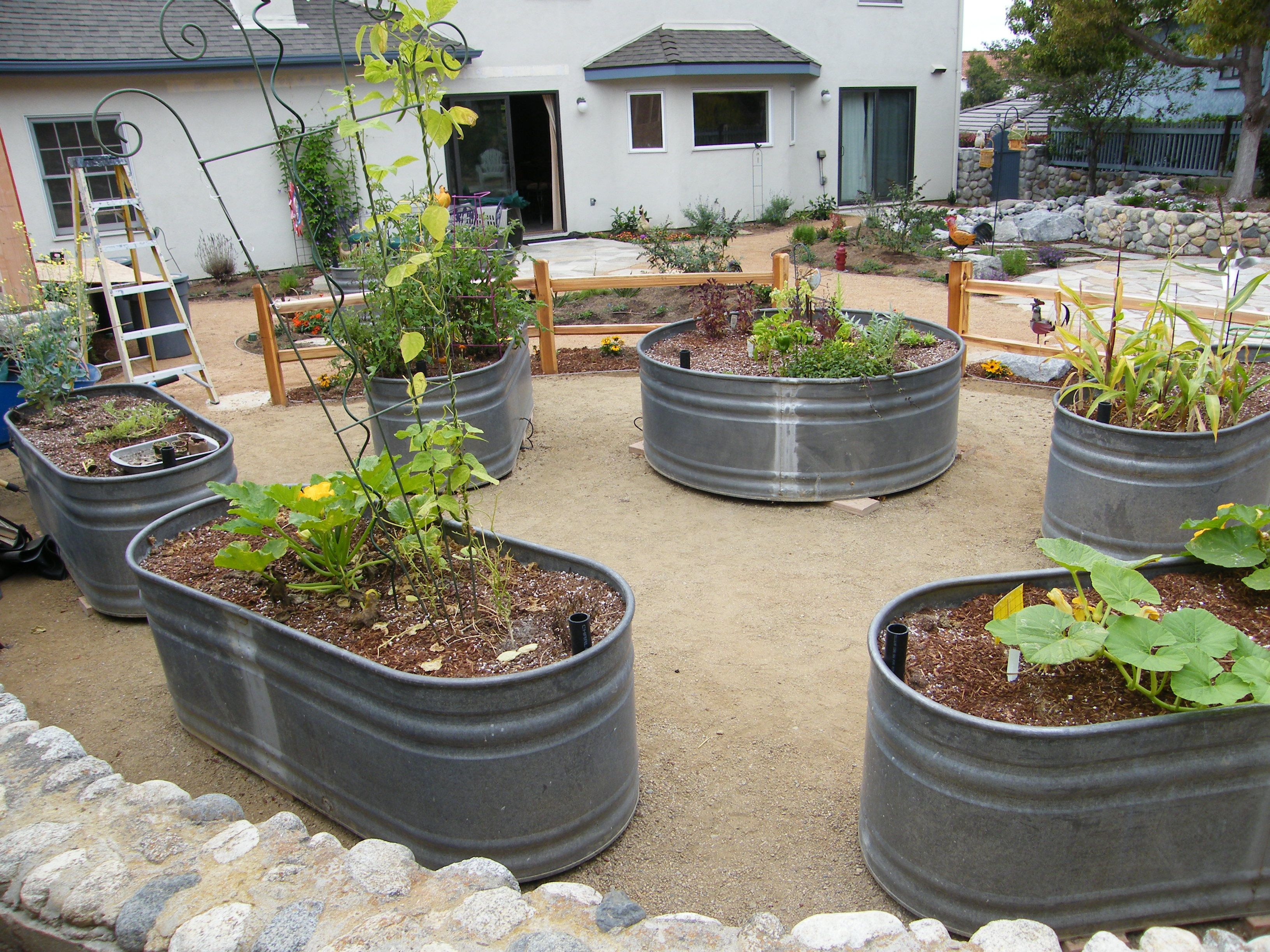 Stock tanks used as raised vegetable beds gardening for Backyard planter ideas