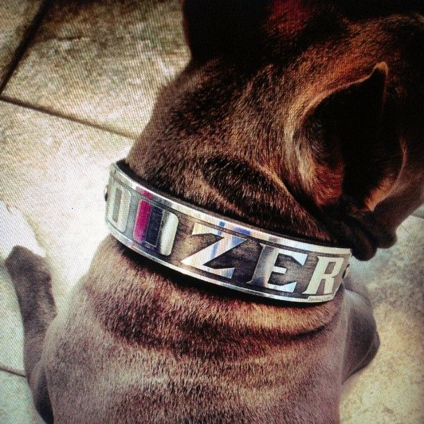 Custom collar for Cara and her canine named Dozer. Collar by SanRevo Custom