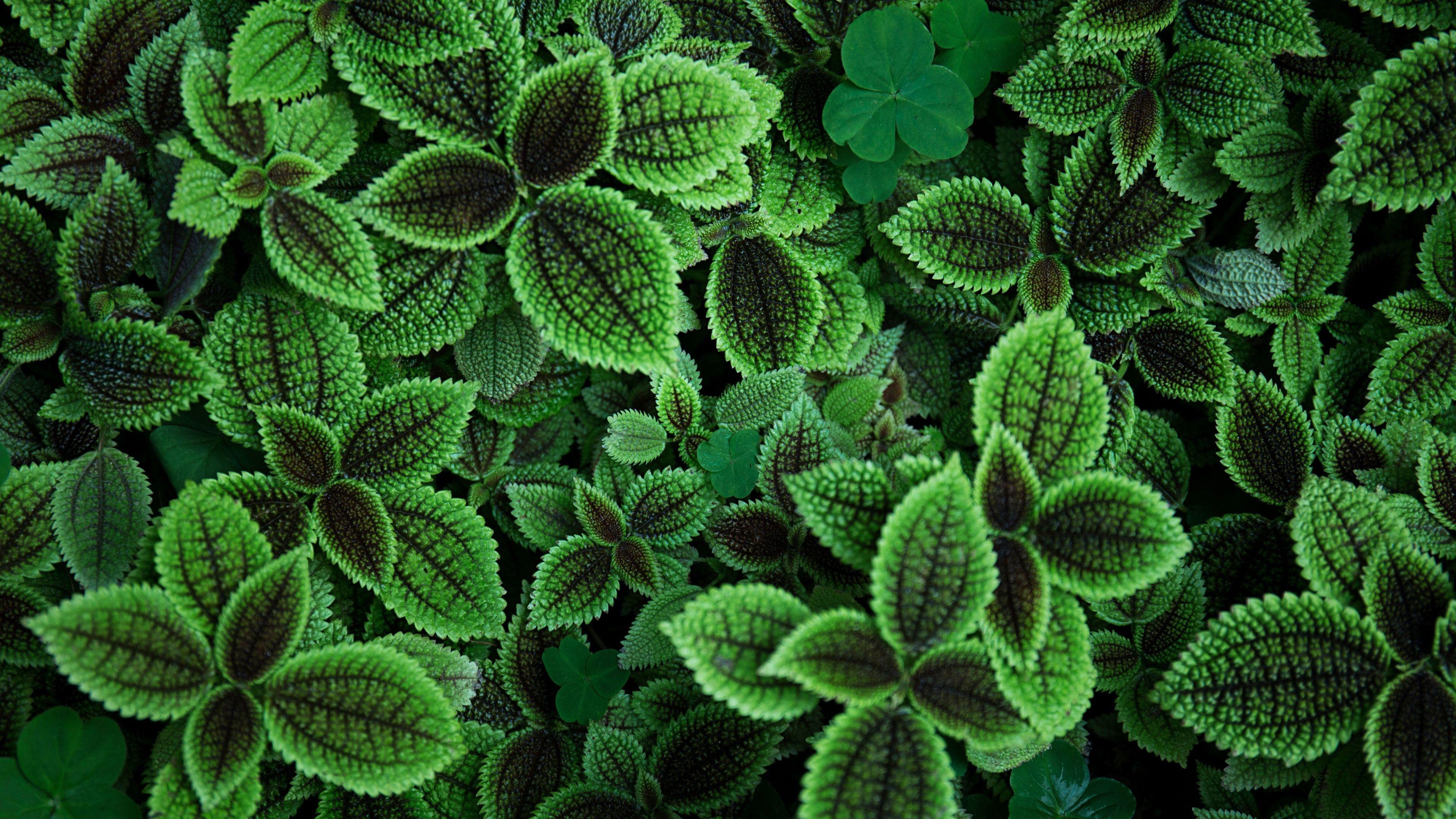 3840x2160 Leaves 4k Full Hd Wallpaper Perfect Plants Plants Green Living Tips