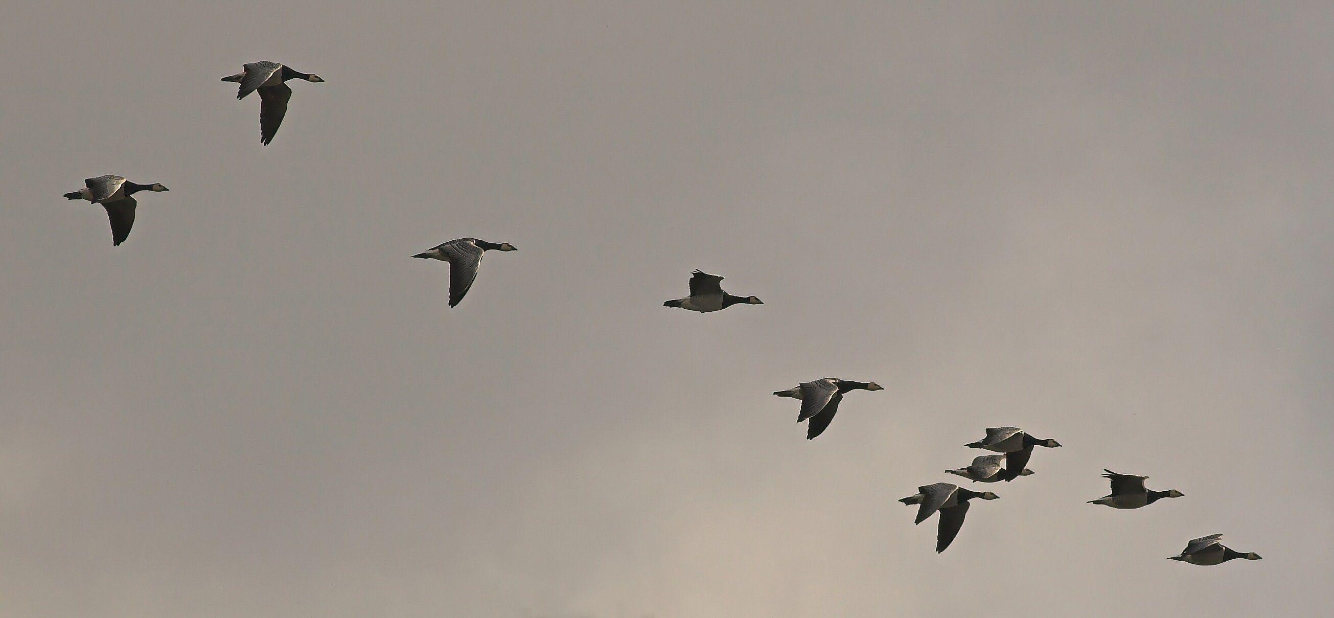 ציפורים נודדות Google Search Bird migration, Birds