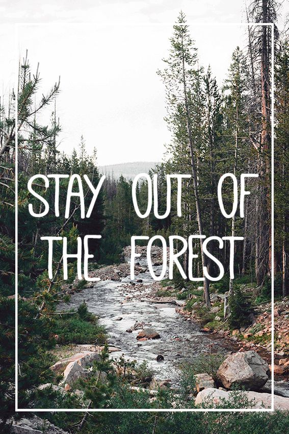 my favorite murder mfm quote wallpaper stay out of the forest get