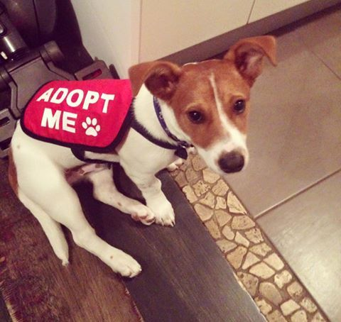 Adopt Me Dog Jacket / Vest from Get your