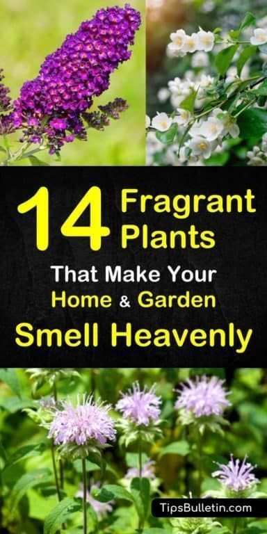 14 Fragrant Plants that Make Your Home and Garden Smell Heavenly