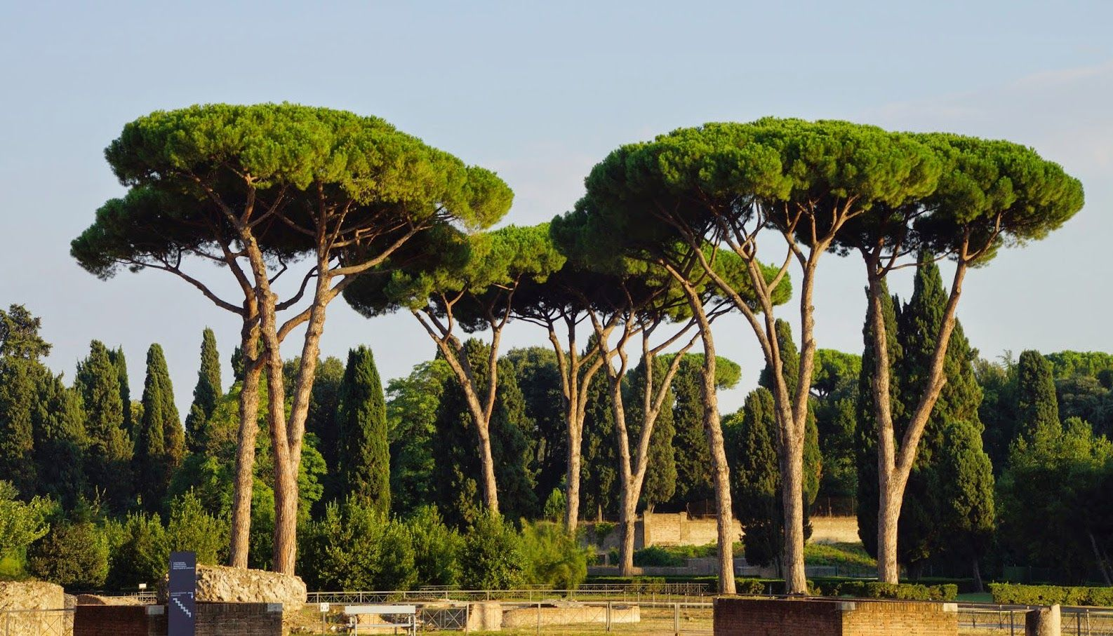 The Pines Of Rome With Images Italian Garden Rome Plants - Il Caminetto Rome Tripadvisor