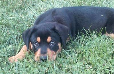 Pair Sold Neighbor S Lost Dog On Craigslist Click Picture To Read Story Losing A Dog Puppies Dogs