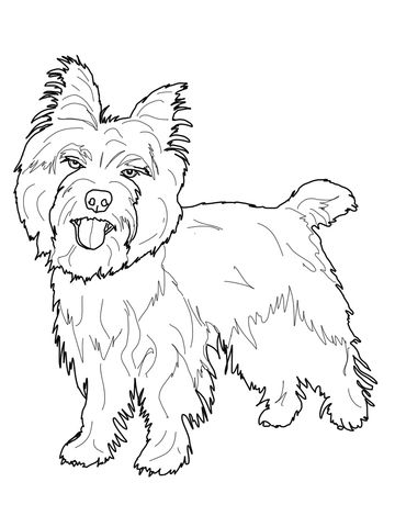 Cairn Terrier Coloring Page Dog Coloring Page Horse Coloring Pages Animal Coloring Pages