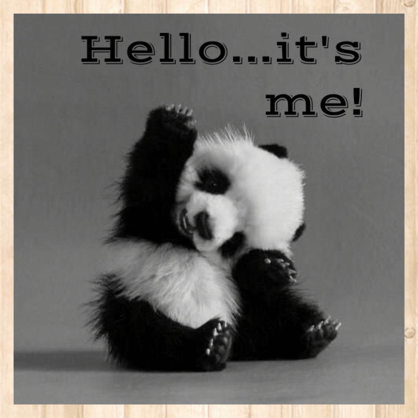 Panda Quotes Cute Baby Panda Bearhelloits Mehttps