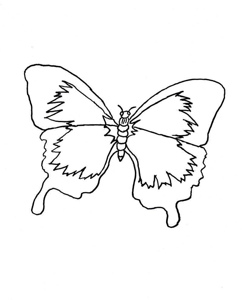 Life Cycle Of A Butterfly Coloring Page Youngandtae Com Butterfly Coloring Page Coloring Pages Blank Coloring Pages [ 990 x 800 Pixel ]