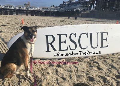 Don't Forget: Remember Me Thursday® on 9/22 | Pooch Smooches | Bloglovin'