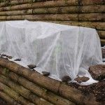 Protect Your Plants In A Freeze How To Protect Plants From Freezing Cold Weather Plants Frost Protection For Plants Hydrangea Winter Care