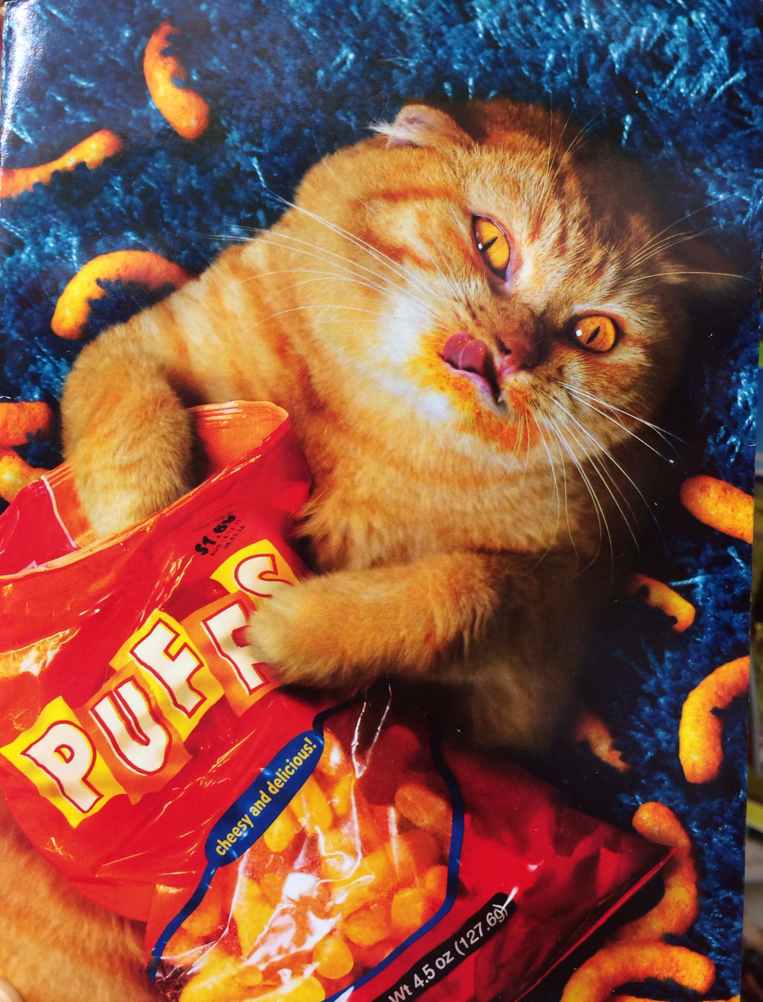 Cat Eating Cheese Puffs Things I Like Pinterest