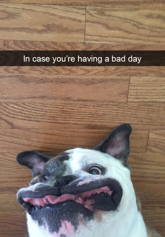175 Hilarious Animal Snapchats Guaranteed To Make You Laugh Out Loud