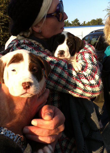 Baby pitbull brothers. At S.T.A.R.T Shelter Transport Animal Rescue Team they keep family together.