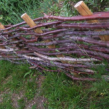 barriere-noisetier.jpg | Jardin | Pinterest | Photos