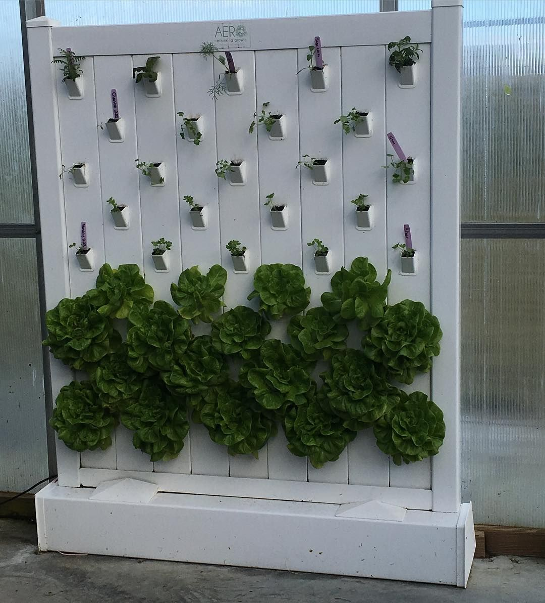 loved this wall of the lettuce growing using aeroponics