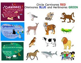 Carnivores herbivores and omnivores akbaeenw carnivores herbivores and omnivores ccuart Choice Image