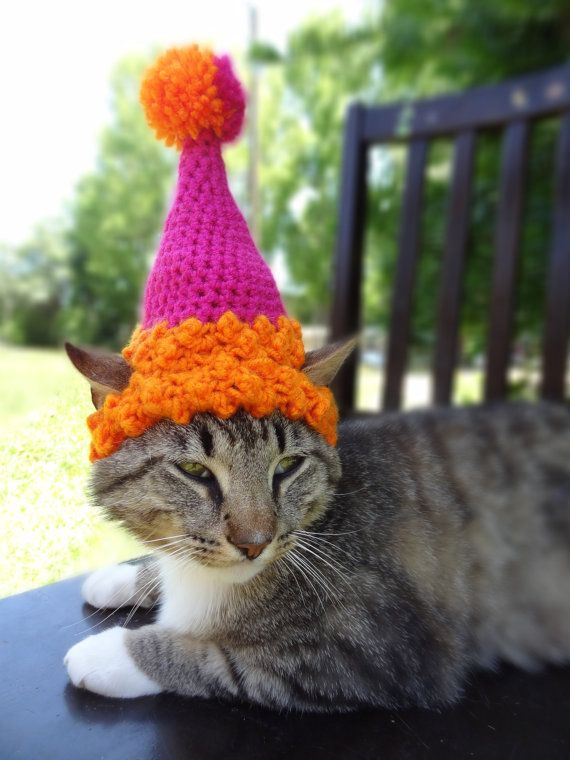 Cat Dog Birthday Party Hat