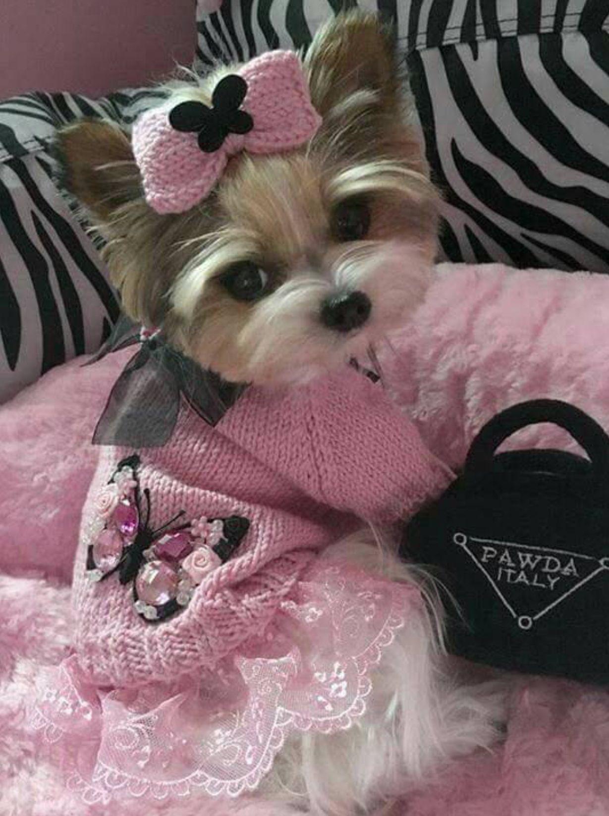 Cute little girlie dog... Cute baby animals, Cute