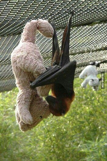 Snuggle Bat!