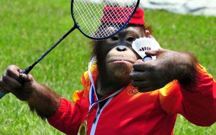 Image result for humor badminton | Monkeys funny, Badminton, Badminton  outfits