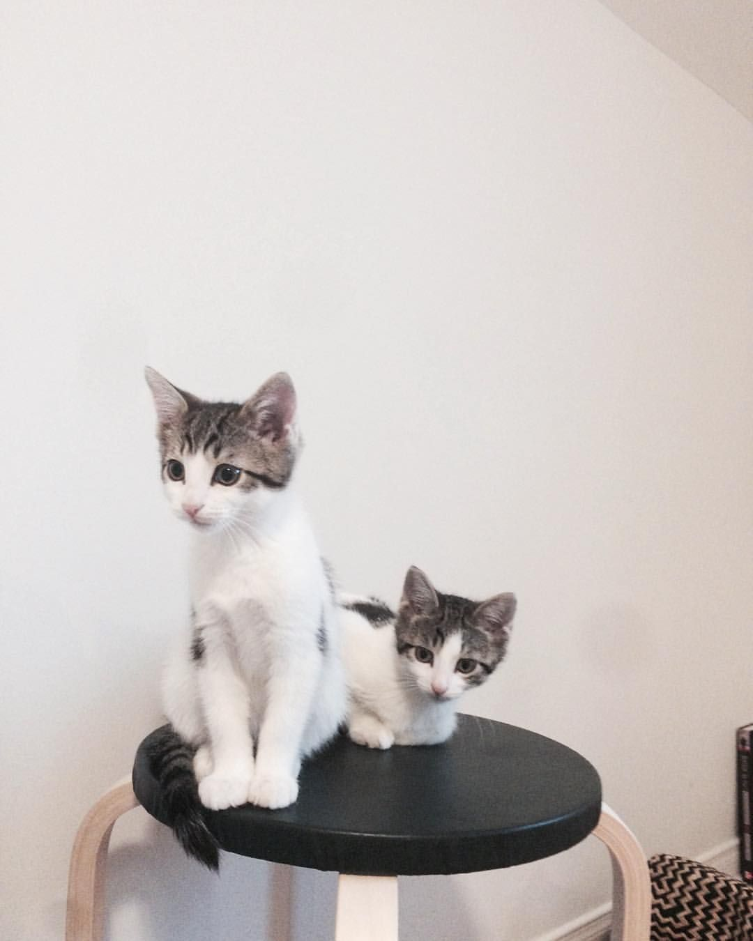 Burger And Fry How Sweet Are These Little Boys I Wish They Could Stay Together Forever And Also Never Grow Up Or Foster Kittens Tabby Kitten Foster Cat