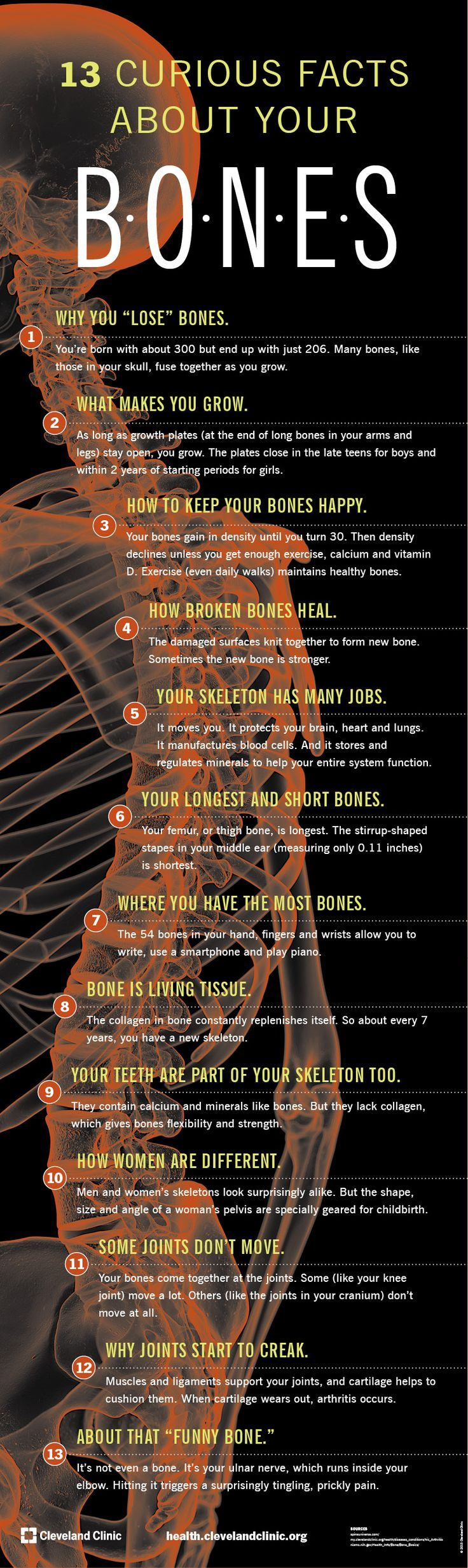 13 Strange And Interesting Facts About Your Bones Infographic