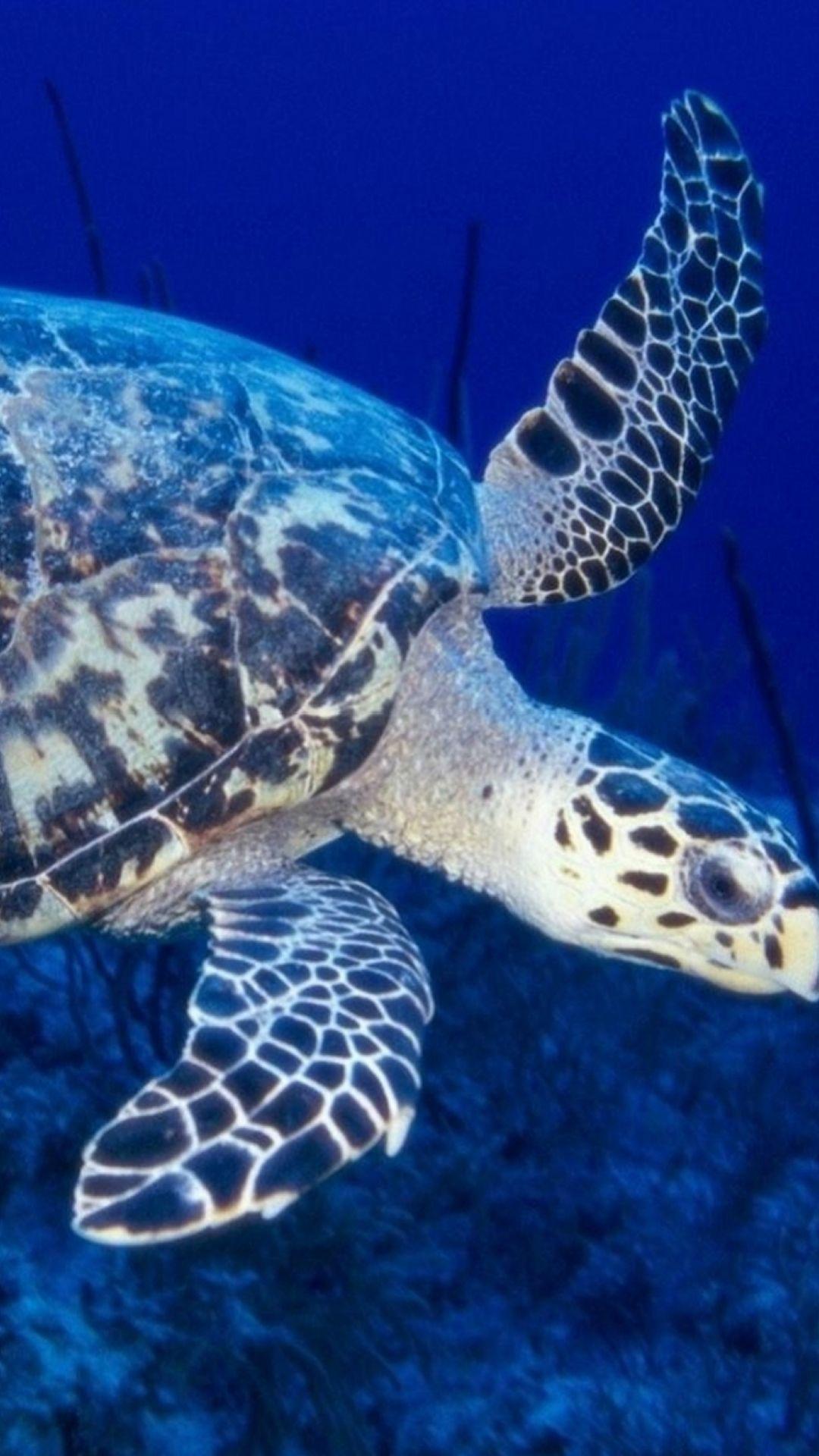 Huge Old Sea Turtle Macro iPhone 6 wallpaper Turtle, Sea