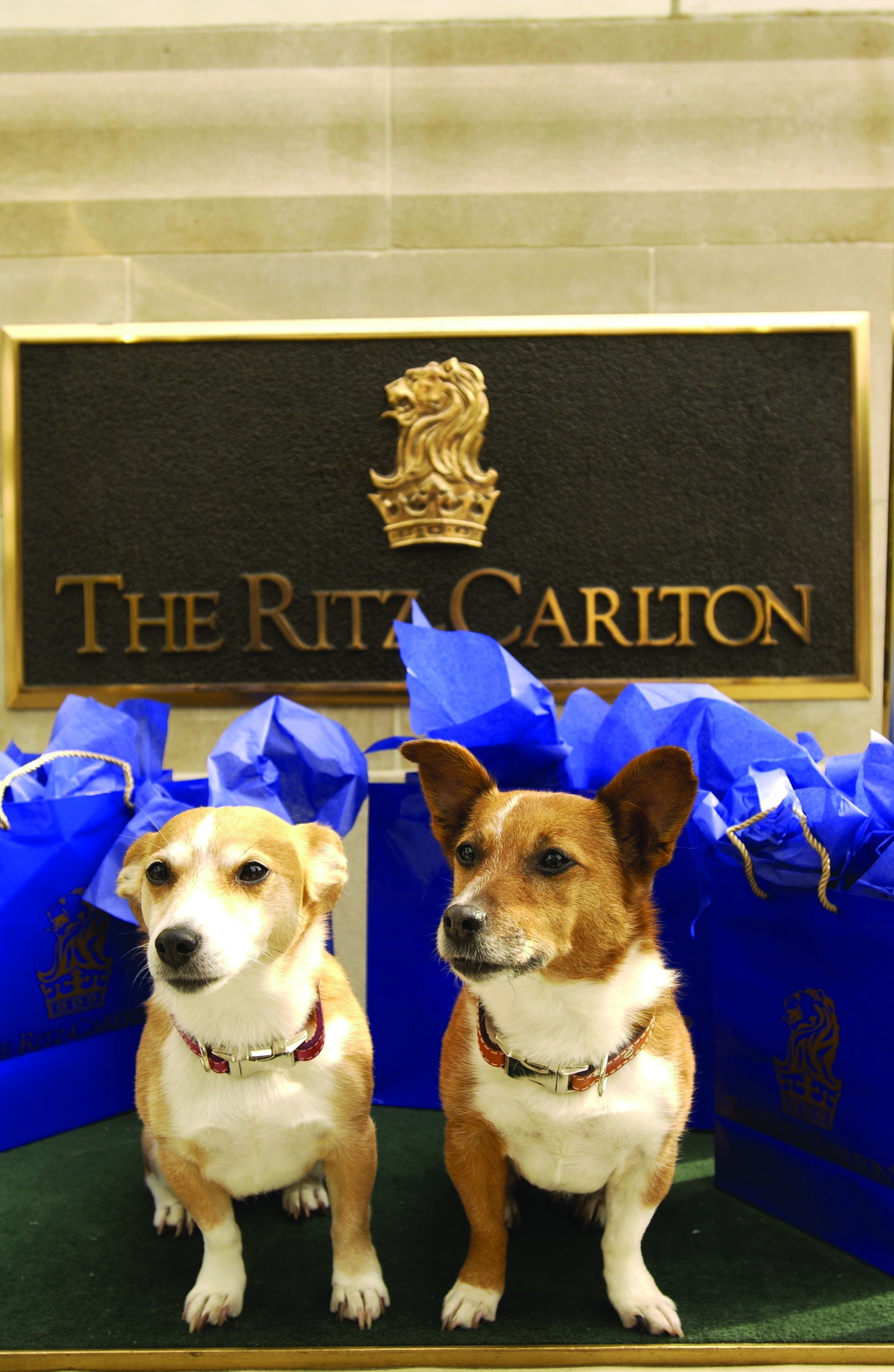 Marti Gras Haven Pet Friendly Ritz Carlton New Orleans Louisiana