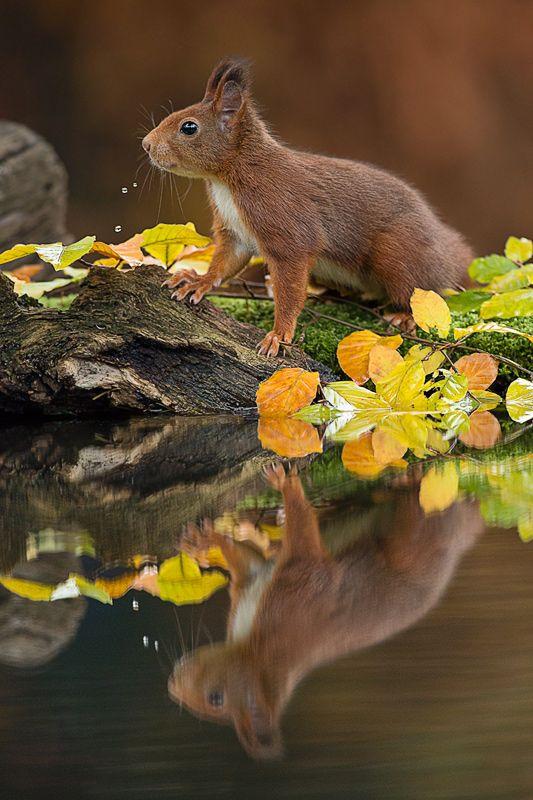 Süßes Eichhörnchen Tiere Süß Eichhörnchen ♥ stylefruits
