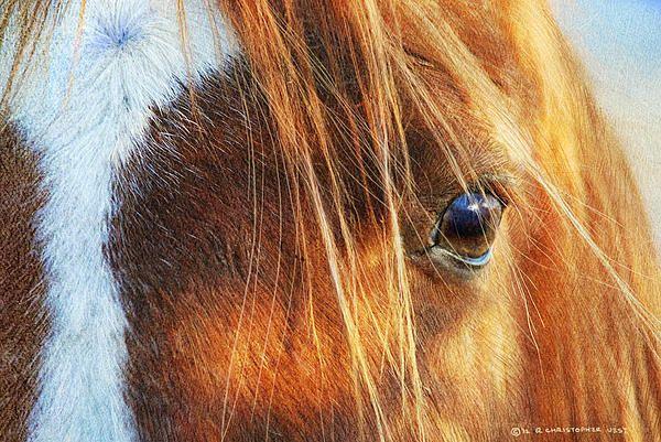 r christopher vest artist | Steady Gaze Horse Eye Print by R christopher Vest