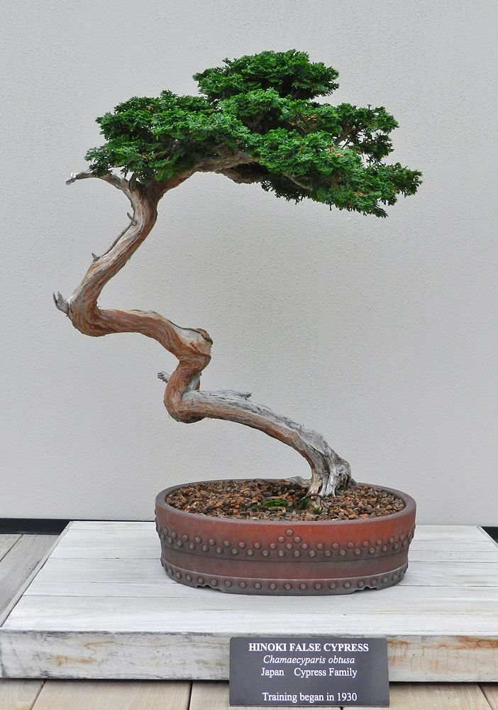 Longwood Gardens Bonsai garden, Bonsai tree, Bonsai art
