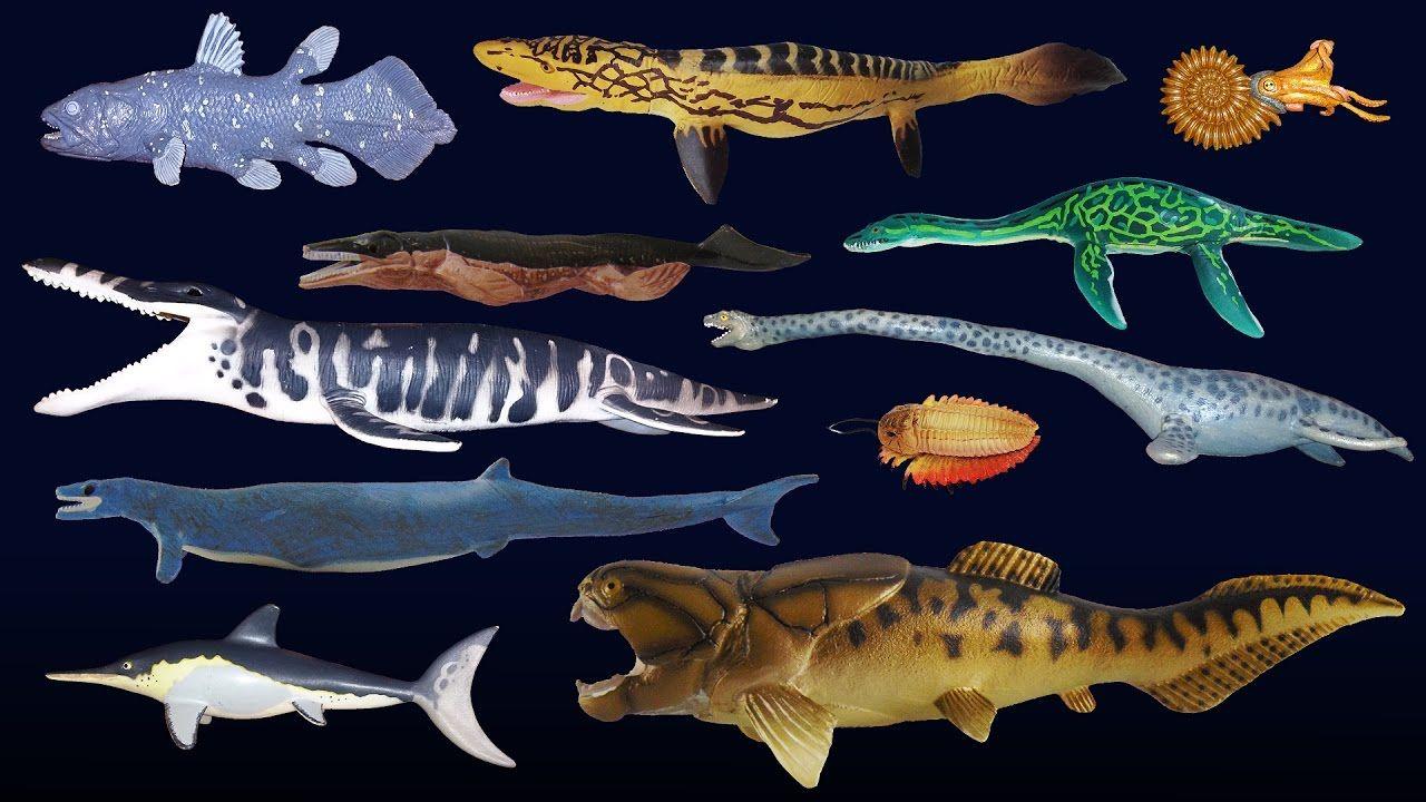 Prehistoric Sea Life Dunkleosteus The Kids' Picture