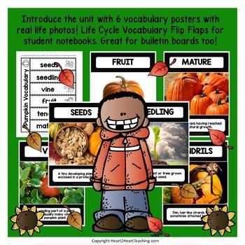 Life Cycle of a Pumpkin 3rd grade Pinterest Pumpkin life cycle