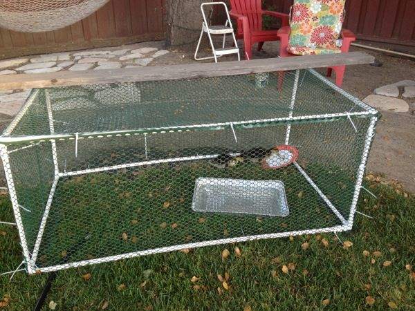 Duck duck mama on pinterest duck house chicken coops for Duck hutch ideas