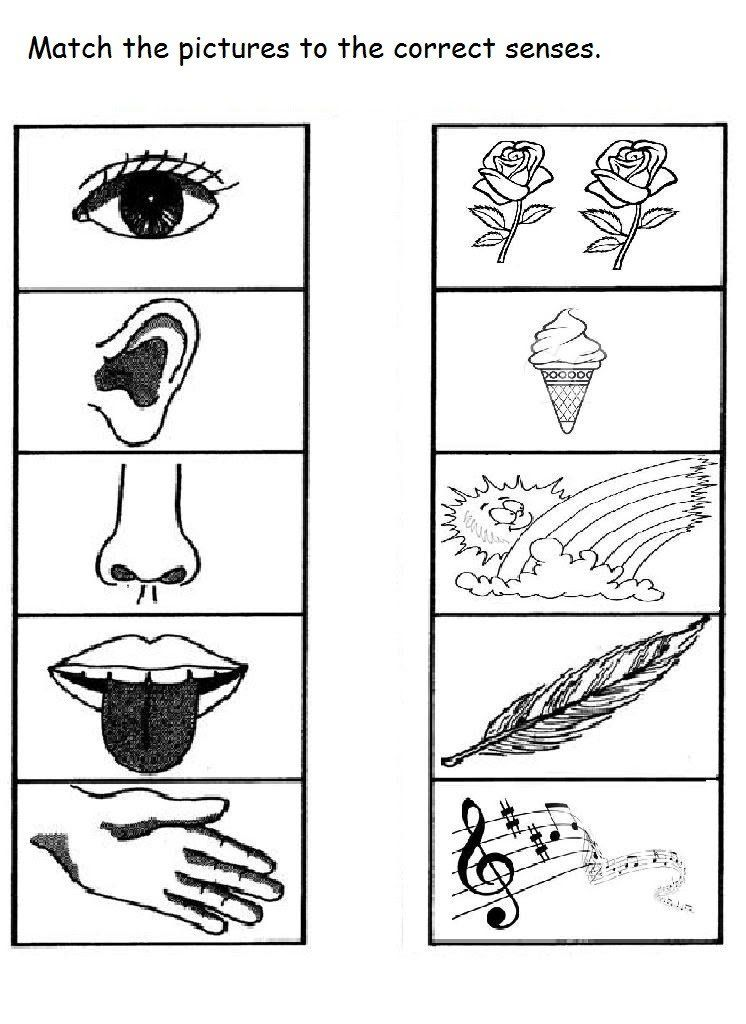 5 Senses Worksheet For Kids 10 Worksheets For Kids Five Senses Worksheet Kindergarten Worksheets