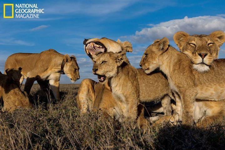 augustus = leeuw grrrom :)