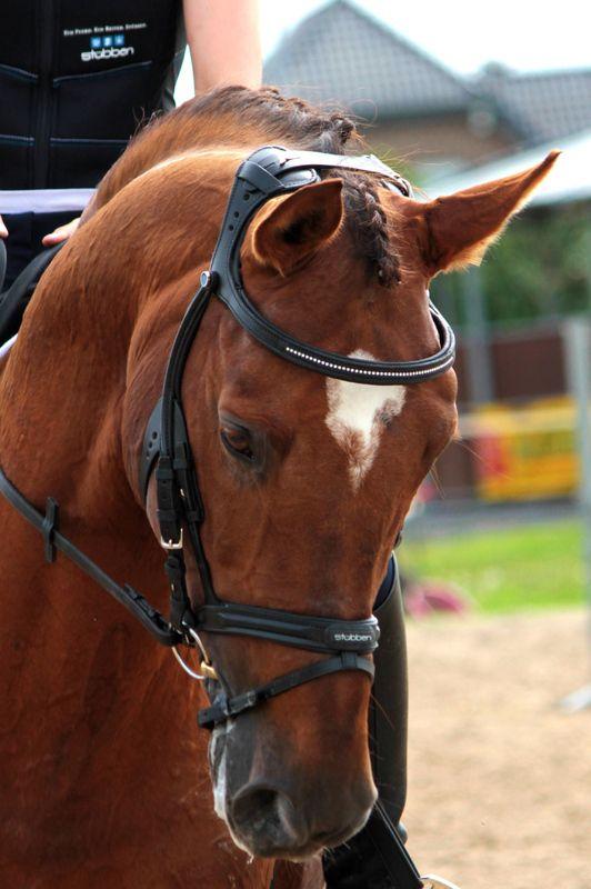 Stubben Freedom 2500 Bridle Horses Beautiful Horses Eventing Horses