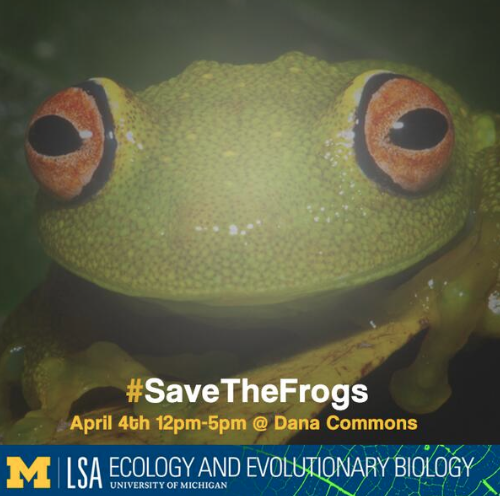 Nearly 1/3 of the world's amphibian species are threatened with extinction. #SavetheFrogs