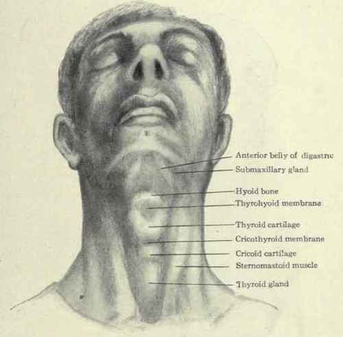 neck images - Bing Images