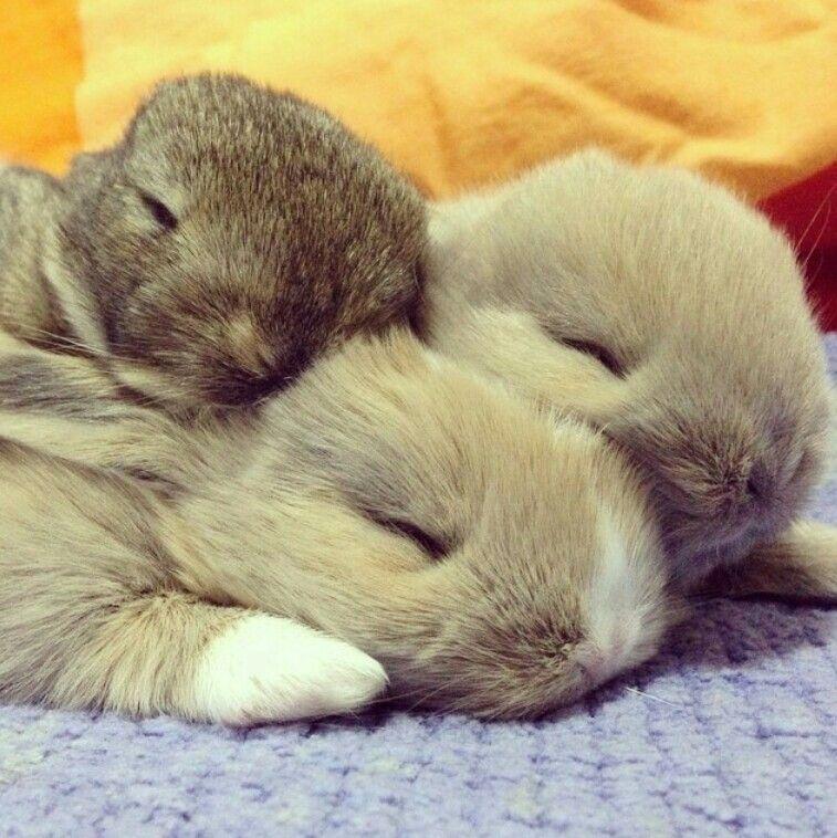 Pin Von Nene C Auf Bunnies Susse Tiere Lustige Tierbabys