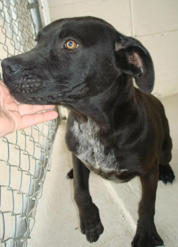 Dogs In This Album Are Located At Okefenokee Humane Society In